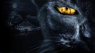 Neuer Themenpark in China geplant: 200 Mio. Dollar teures Filmset von Legend of the Demon Cat soll zum Freizeitpark werden