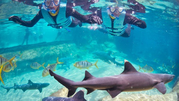 Tauchen mit Haien in Orlando Discovery Cove SeaWorld