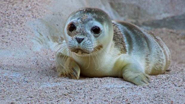 Zoo Karlsruhe Seehund-Baby 2017