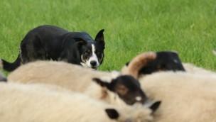 """Zoo Safaripark Stukenbrock: """"Dogs Day"""" mit freiem Eintritt für Hundehalter am 9. Juli 2017"""