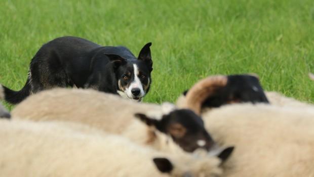 Zoo Safaripark Stukenbrock Dogs Day