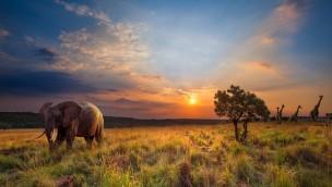 Safaripark Beekse Bergen günstiger besuchen: Mit Ticket-Gutschein 35% sparen!