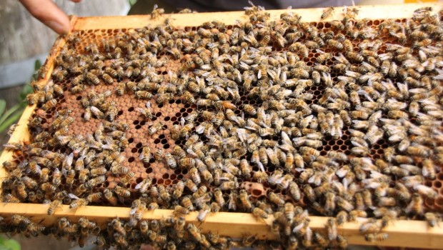 Erlebnis-Zoo Hannover Bienen