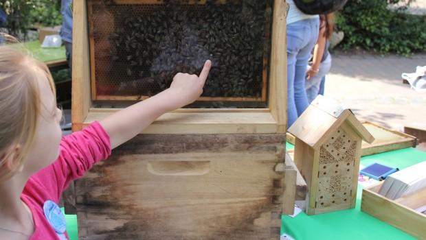 Erlebnis-Zoo Hannover Familienfest Bienen entdecken
