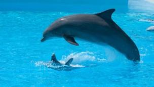 Totes Delfin-Baby entfacht erneut Debatte über die Haltung von Delfinen in Wasserparks in Frankreich
