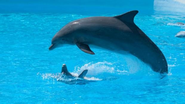 park-asterix-delfin-haltung-gefangenschaft