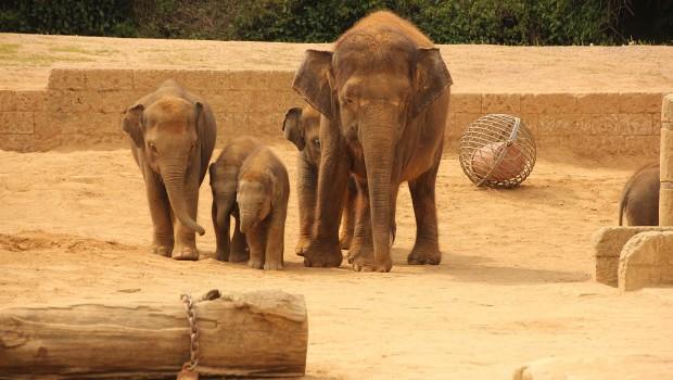 Erlebnis-Zoo Hannover Elefanten