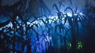 """""""Zeit der Schattenwesen"""" 2017 im Hansa-Park zum letzten Mal mit Maislabyrinth"""