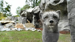Tierpark Hellabrunn gewährt Blick Hinter die Kulissen am 18. November 2017