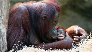 Zoo Rostock begrüßt mehr als drei Millionen Besucher in den ersten fünf Jahren des DARWINEUM