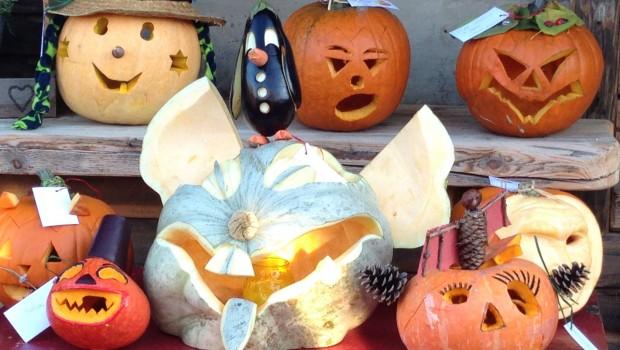 Erlebniswelt SteinReich Halloween Kuerbisse
