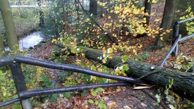 Freizeitpark Plohn herwart Baum umgestürzt