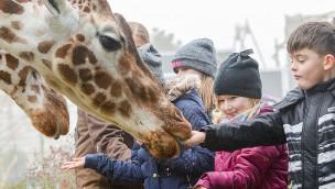 Jaderpark im Winter Giraffenfüttern