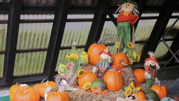 Rasti-Land Kürbisse Halloween