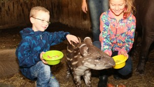 "Tapir-Nachwuchs im Zoo Osnabrück heißt ""Mateo"": Namenswettbewerb beendet"