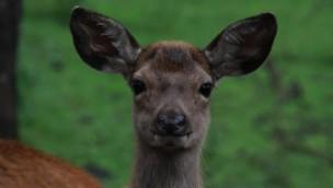 Wildpark Müden mit Rabatt erleben: Eintrittskarten zum halben Preis erhältlich