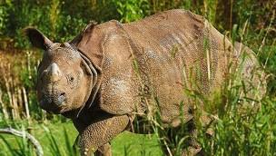 Looping-Gruppe übernimmt Zoo de la Flèche und plant 10 Millionen Euro-Investition