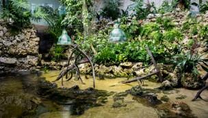 Mangroven-Anlage im Münchner Tierpark Hellabrunn jetzt eröffnet