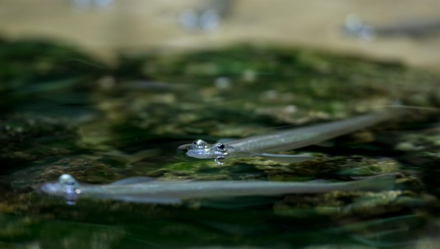 Tierpark Hellabrunn: Vieraugen im Mangrovenbecken