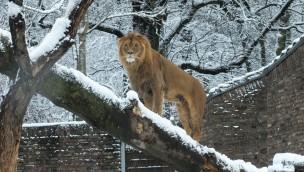 Zoo Duisburg günstiger erleben: Gutschein für Eintritt mit über 20 % Rabatt!