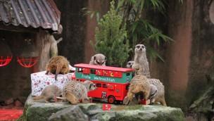Zoo Hannover feiert Weihnachten 2017: Geschenke für die Tiere und freier Eintritt für die Besucher