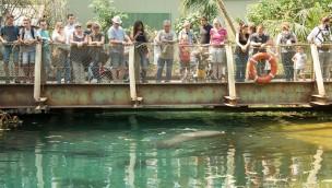 Burgers' Zoo freut sich über Besucherzuwachs in 2017 dank neuer Mangrove