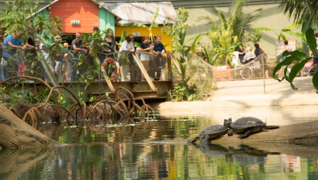 Burgers' Zoo Schildkröten in Mangroven