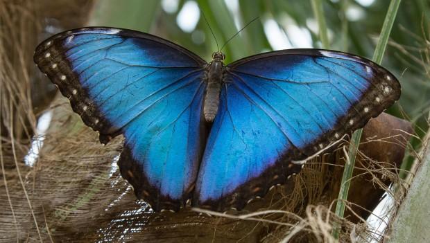 Burgers' Zoo Schmetterlinge in Mangroven