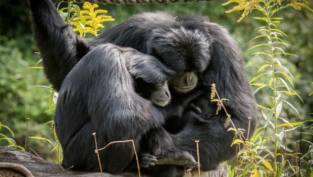 Affen kuscheln im Tierpark Hellabrunn