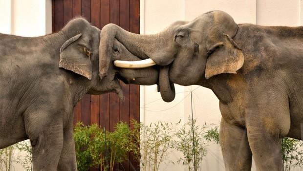 Elefanten Schmusen Im Tierpark Hellabrunn