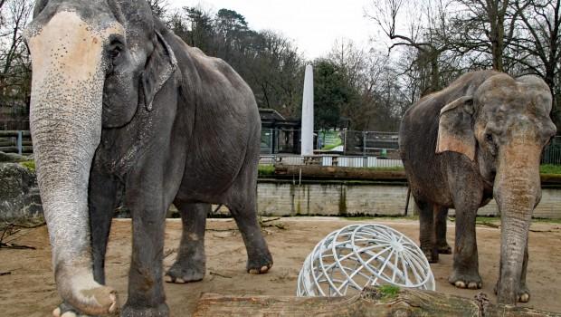 Zoo Karlsruhe Elefanten Außenanlage Neubau