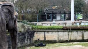 Zoo Karlsruhe vergrößert Elefanten-Anlage: Dreifache Größe für Außenbereich geplant
