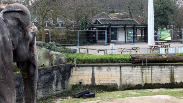 Zoo Karlsruhe Elefantenhaus Umbau