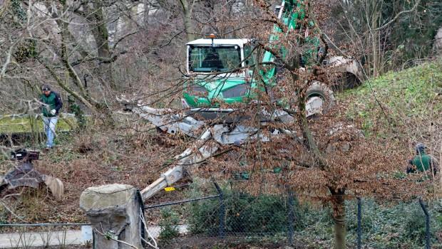 Zoo Karlsruhe Luchs Anlage neu 2018 Baustart