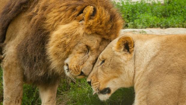 """Zoo Osnabrück Führung """"Liebeswelt der Tiere"""""""