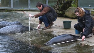 Tierische Inventur im Zoo Osnabrück: 2.656 Tiere aus 298 Arten leben Anfang 2018 im Tiergarten