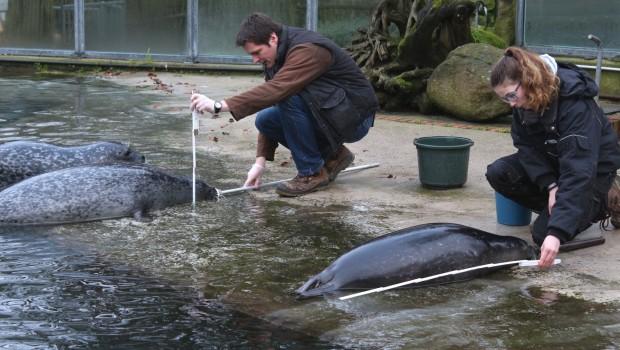 Zoo Osnabrück bei der tierischen Inventur 20118: Die Seehunde
