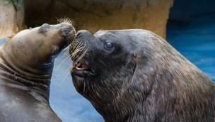 Valentinstag 2018 im Zoo Heidelberg: Führung mit Einblicken ins tierische Liebesleben