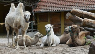 """""""Oma-Opa-Enkel-Tag"""" im Zoo Heidelberg 2018 mit Führung zum Thema """"Jung und Alt"""""""