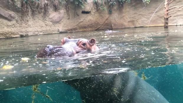 Zoo Köln Hippodrom Goldmine
