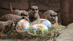 Erlebnis-Zoo Hannover zu Ostern 2018: Diese Aktionen werden geboten!
