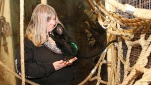 """Nach Handaufzucht im Zoo Osnabrück: Klammeraffe """"Smiley Hope"""" trifft auf Artgenossen"""