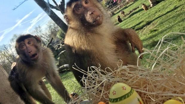 Ostern Zoom Erlebnsiwelt Affen