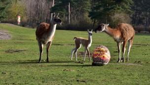 "Serengeti-Park Osteraktion 2018: ""Eintritt frei mit Osterei"""