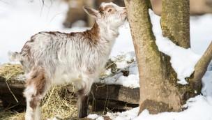 Tierpark Hellabrunn startet in die Saison 2018: Das ist neu zum Auftakt!