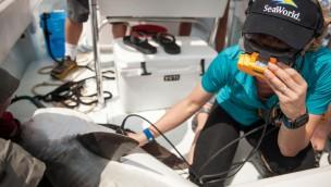 """SeaWorld stellt Leitbild """"Park To Planet vor"""": Erkenntnisse aus Freizeitpark-Besuch für den Alltag"""