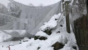 Zoo Rostock öffnet am 3. April 2018 nach Beseitigung von Schneefall-Schäden wieder