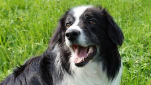 """Dogs Day"" 2018 im Zoo Safaripark Stukenbrock: Freier Eintritt mit Hund!"
