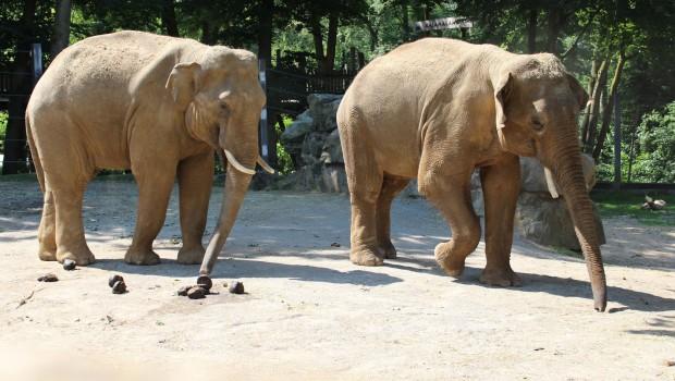 Elefanten Abschied Zoo Osnabrück