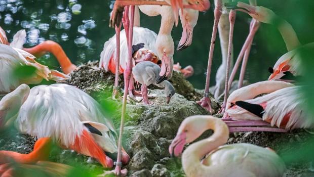 Flamingo Babys Hellabrunn